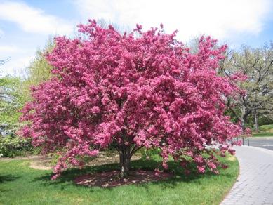ボタニカル桜7