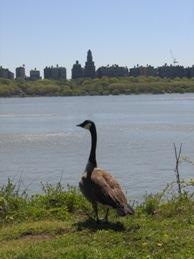 ハドソン川散歩6