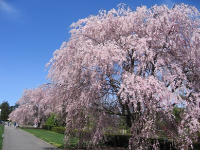 ボタニカル桜5