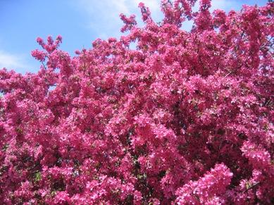ボタニカル桜0