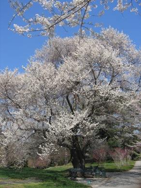 ボタニカル桜2