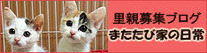blog_234-60