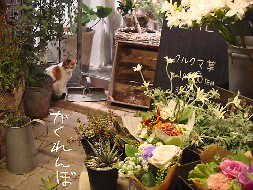 花屋にゃんこ1
