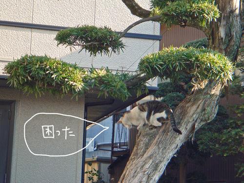木登りにゃんこ3