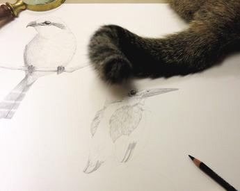 ネコの跳ねボウキ