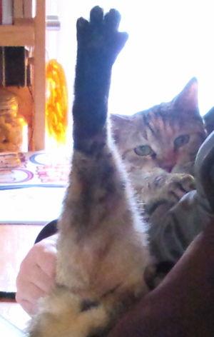 ネコの新体操