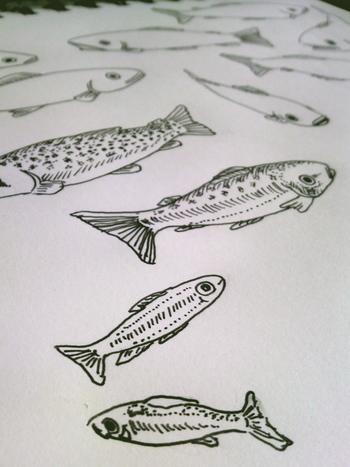 川魚を描いています.jpg