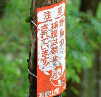 野鳥の捕獲は禁止