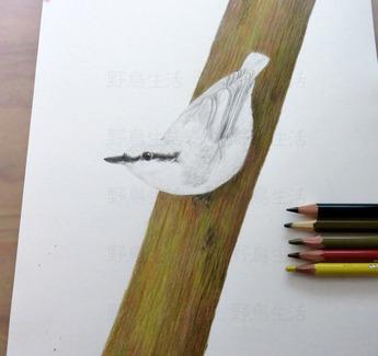 樹皮から描いた