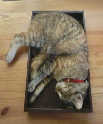 箱入り猫3