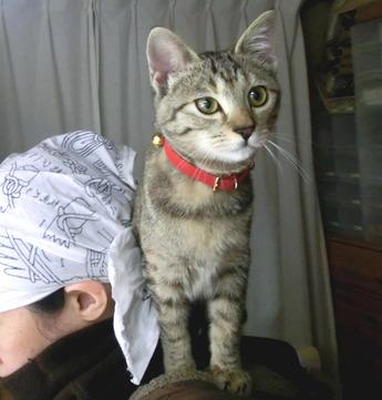 背後霊かと思ったら猫だった