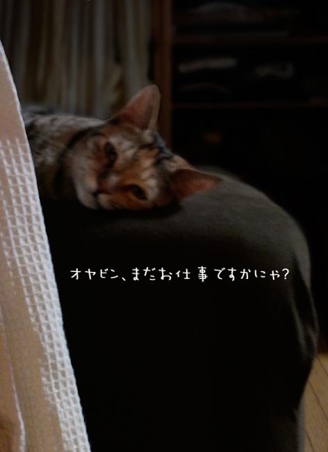 ちー090817_1.jpg
