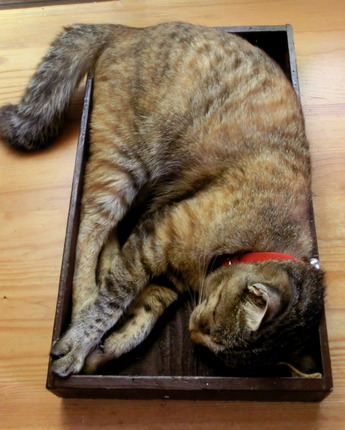 箱入り猫2