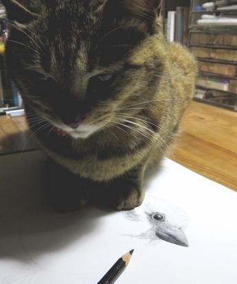 猫が雀をえがかせてくれない2
