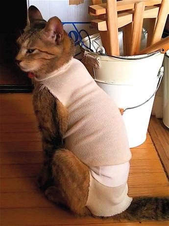 猫避妊手術2