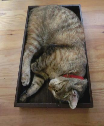 箱入り猫5