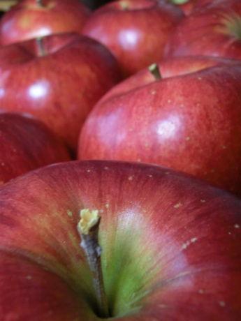 ひろふねりんご1