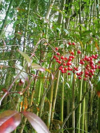 熊野の森2