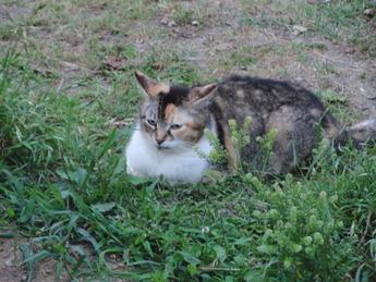 長居公園の猫3