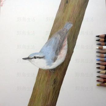 ゴジュウカラ一羽目