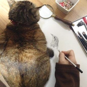 トラツグミ描くのにねこ