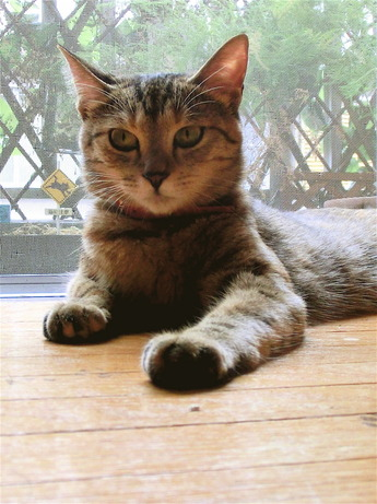 猫避妊手術1