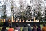 明野薪能桜満開10-4-10(5)大鼓連調