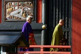 雨引観音08-03-16河津桜
