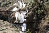しなやかな竹の空間flutter wheel