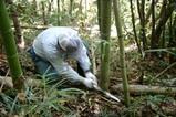 西塩子の回り舞台08-09-287竹の切り出し