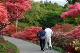 笠間09-04-30佐白山ツツジ8分咲き
