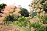あじさいの森・そば道場(5)イングリッシュガーデン