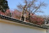 梅弘道館08-03-08