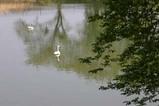 白鳥中里のため池