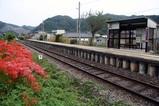 彼岸花09-09-19(8)中舟生駅
