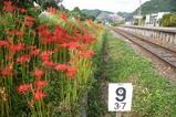 彼岸花08-09-23中舟生駅列車線路