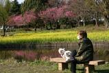 古河桃まつり桃の花菜の花(3)