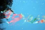 竜神峡鯉のぼりまつり08-05-01(1)こいのぼり