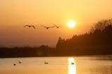 白鳥古徳沼10-03-14