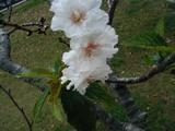 十月桜学習センター061012