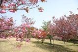 桜静峰公園
