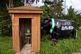 公衆電話と牛