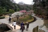 西山荘桃源梅09-03-08