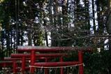 十月桜水戸八幡