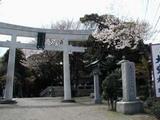 大甕神社の桜
