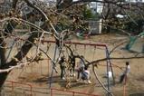 桜日立前原公園