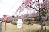 桜東海村さくらまつり
