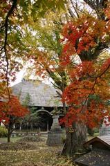 佐竹寺の銀杏