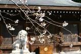 桜熊野神社