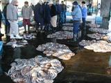 久慈漁港07-03-08b